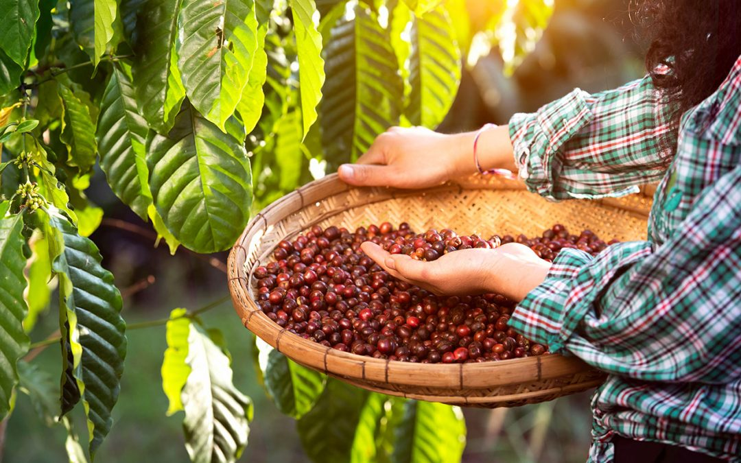 Where to Get Local Coffee Beans